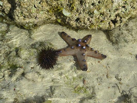 star-fish.jpg